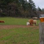 logsdon-organic-farmhouse-ales