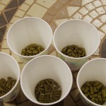 step-by-step-brew-day-at-Top-Rung-Brewing-guessing-hops
