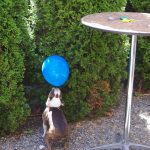Parkway-Tavern-Tacoma-81st-Birthday-Bash-balancing-dog