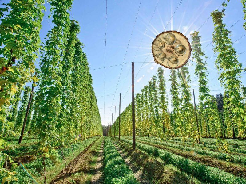 craft-beer-crosscut-flight-flavors-tacoma