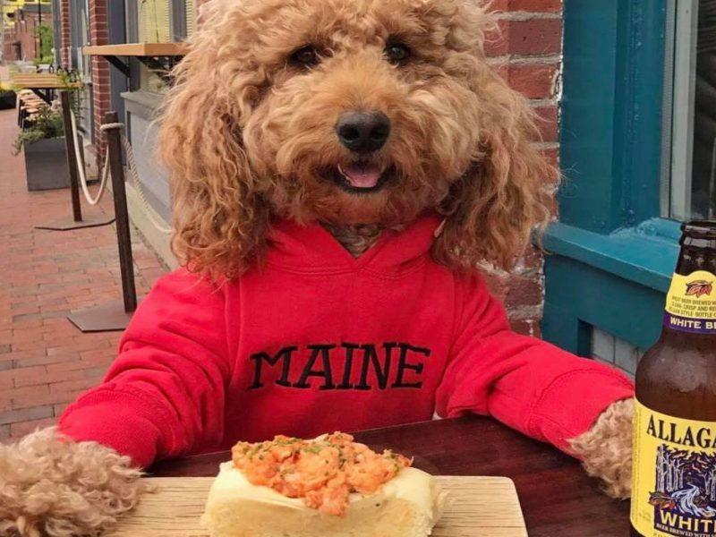 peaks-and-Pints-Instagram-stalker-Allagash-Brewing-Dog