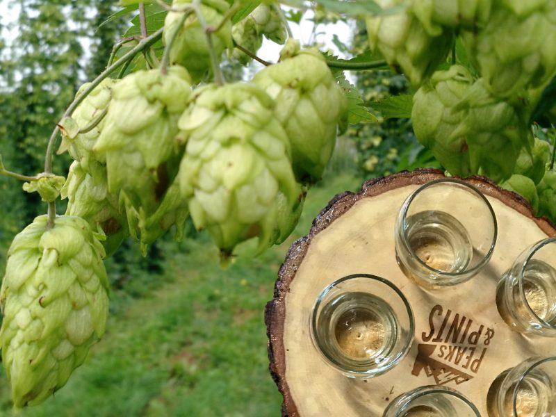 Craft-Beer-Crosscut-10-7-17-A-Flight-of-Hop-Harvest