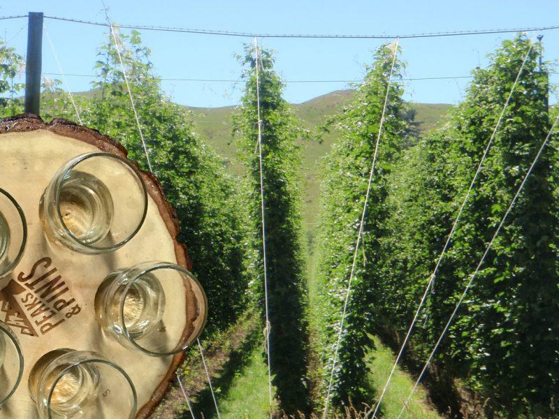 Craft-Beer-Crosscut-4-3-18-A-Flight-of-Motueka