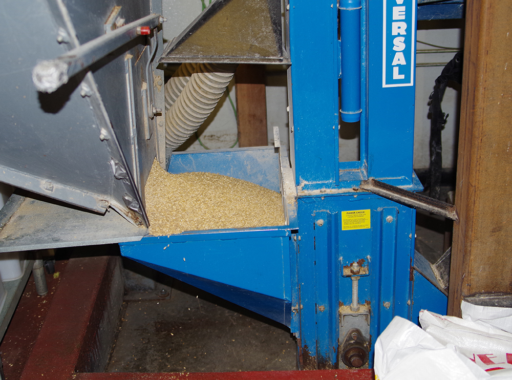 Double-Mountain-Cool-Camp-IPA-milling-grain