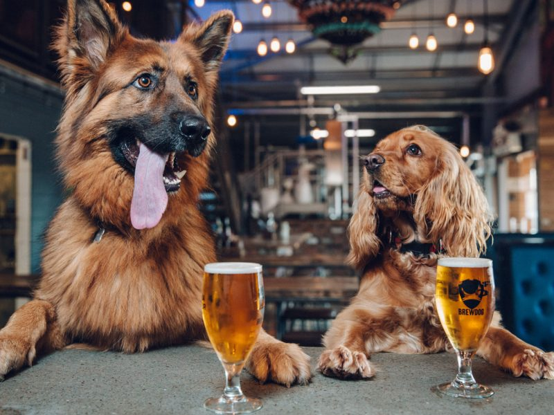 Brewdog-IPA-for-dogs