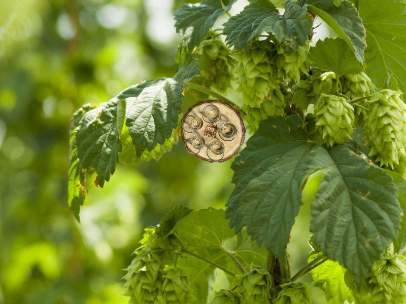 Craft-Beer-Crosscut-1-18-19-A-Flight-of-Centennial