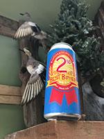 Matchless-2nd-Best-Bitter-Tacoma