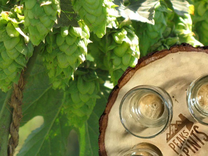 Craft-Beer-Crosscut-3-7-19-A-Flight-of-Citra-Hops