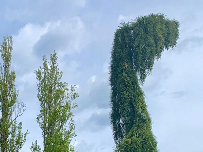Dinosaur-Tree-Tacoma