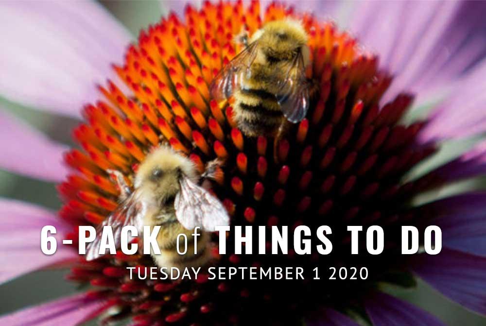 6-Pack-Photo-pollinator-garden-9-1-20